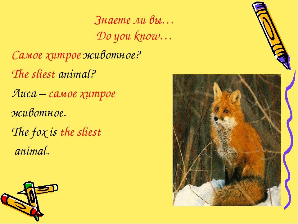 Знаете ли вы… Do you know… Самое хитрое животное? The sliest animal? Лиса – с...