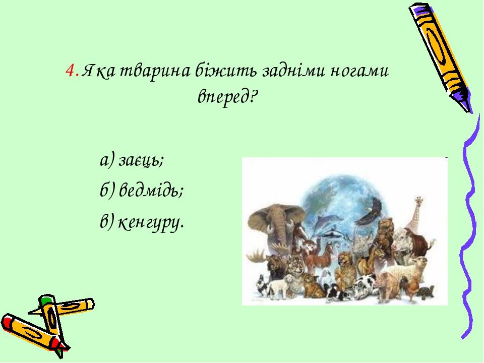 4. Яка тварина біжить задніми ногами вперед? а) заєць; б) ведмідь; в) кенгуру.