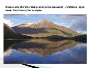 В воде озера обитает огромное количество эндемиков – голомянка, нерпа, рачки