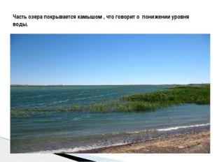 Часть озера покрывается камышом , что говорит о понижении уровня воды.