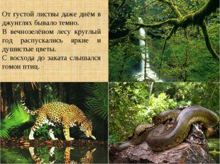 От густой листвы даже днём в джунглях бывало темно. В вечнозелёном лесу кругл