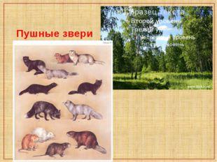 Пушные звери