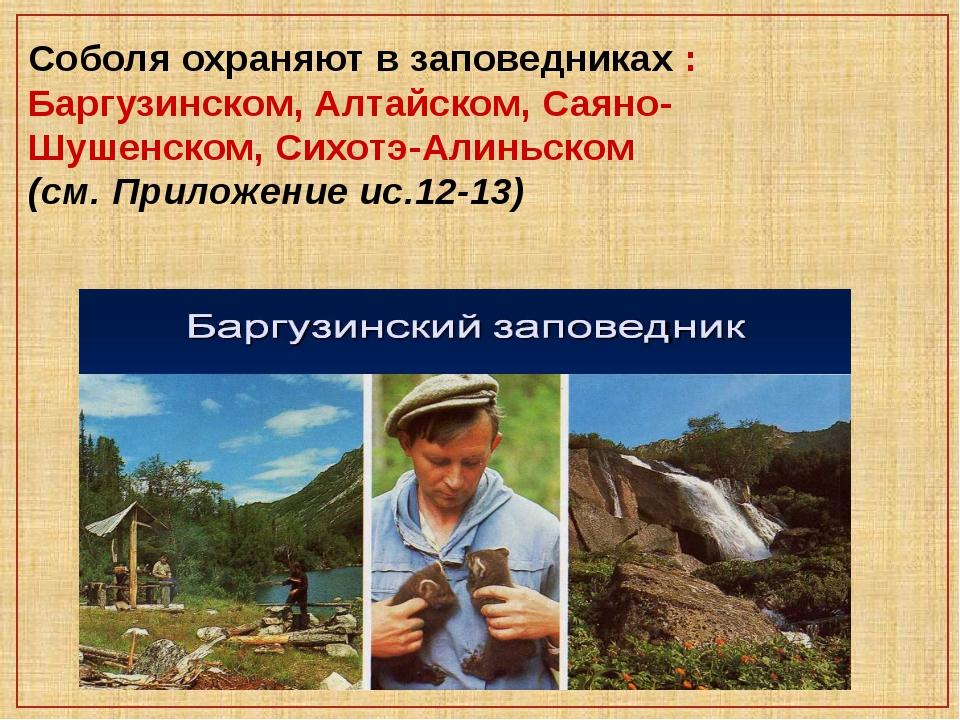 Соболя охраняют в заповедниках : Баргузинском, Алтайском, Саяно-Шушенском, Си...