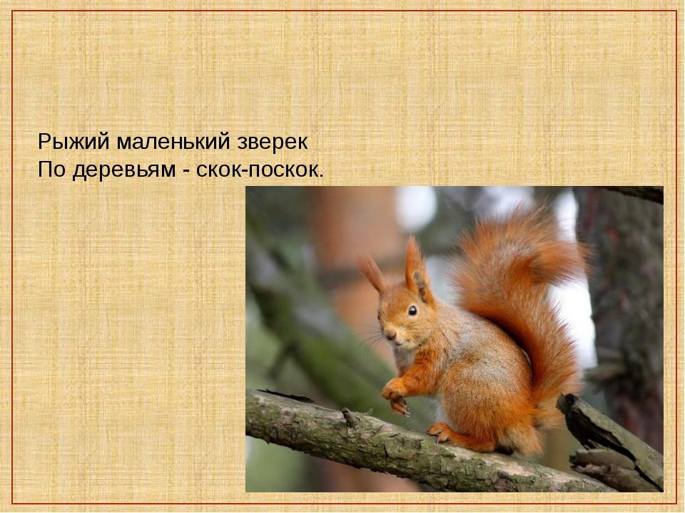 Рыжий маленький зверек По деревьям - скок-поскок.