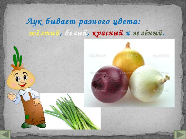 Лук бывает разного цвета: жёлтый, белый, красный и зелёный.