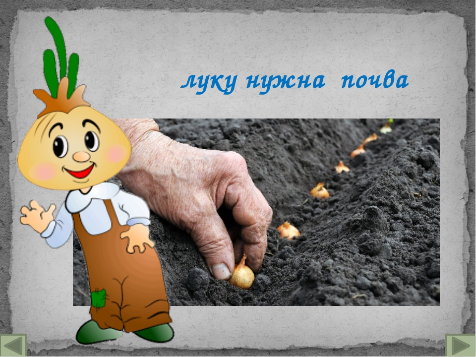 луку нужна почва