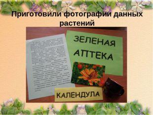 Приготовили фотографии данных растений