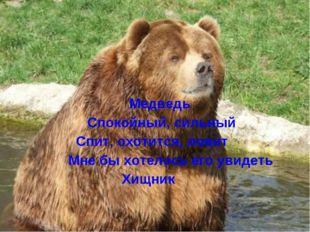 Медведь Спокойный, сильный Спит, охотится, ловит Мне бы хотелось его увидеть
