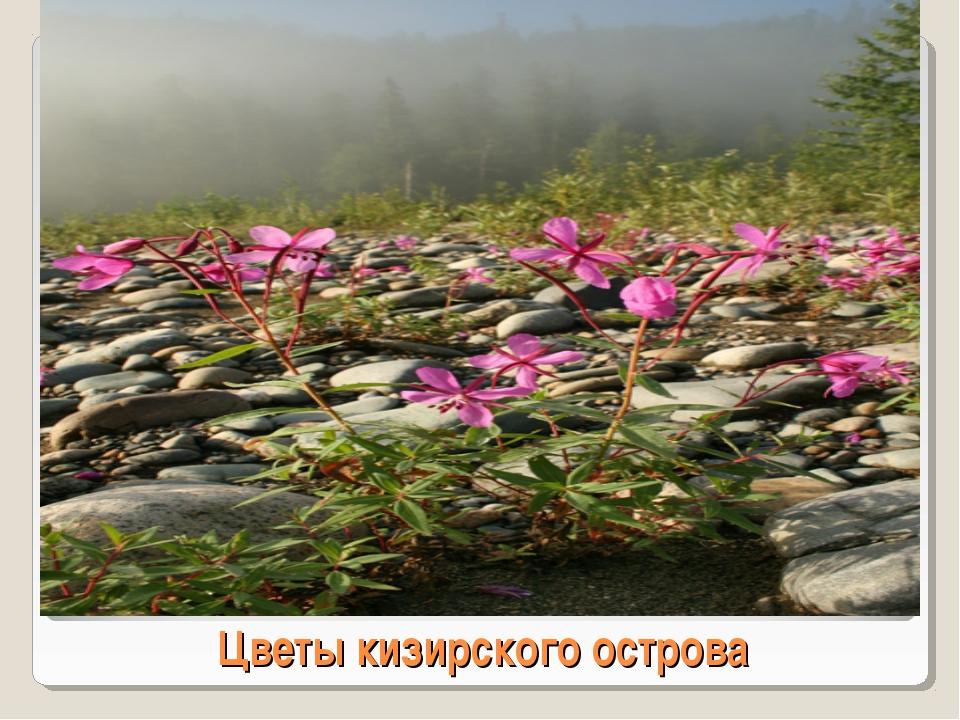 Цветы кизирского острова