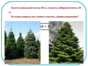 Высота кавказской пихты 60 м, а высота сибирской пихты 30 м. На какие вопросы