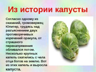 Из истории капусты Согласно одному из сказаний, громовержец Юпитер, трудясь н