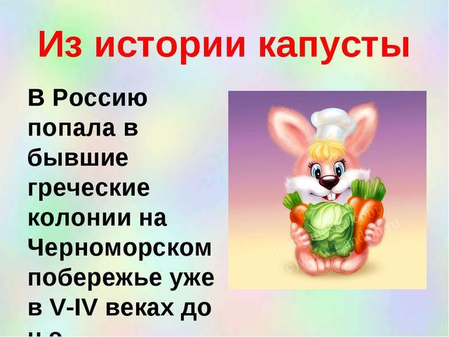 Из истории капусты В Россию попала в бывшие греческие колонии на Черноморском...