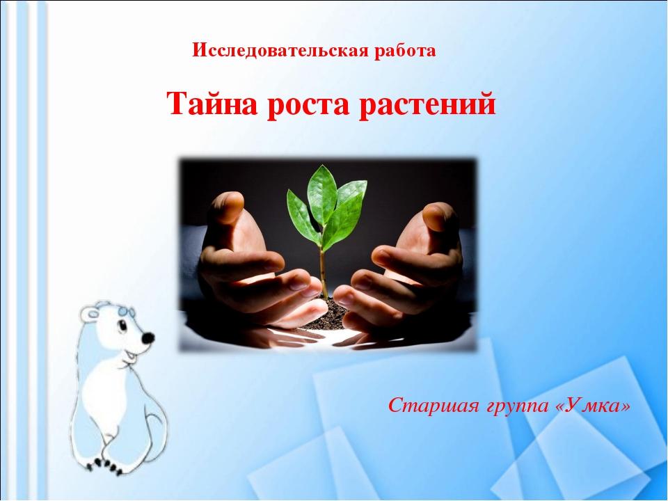 Исследовательская работа Тайна роста растений Старшая группа «Умка»