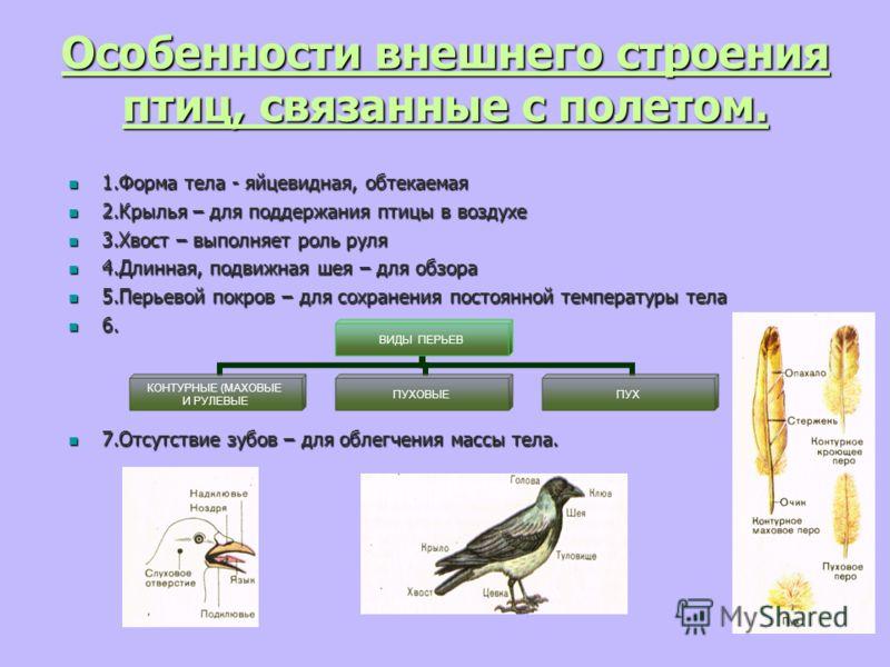 Какие особенности строения птиц связаны с полётом