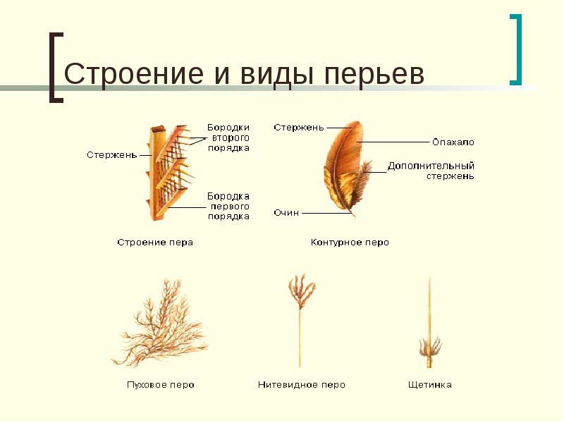 http://mypresentation.ru/documents/6d91827e83a412cc3a577497b397fce4/img4.jpg