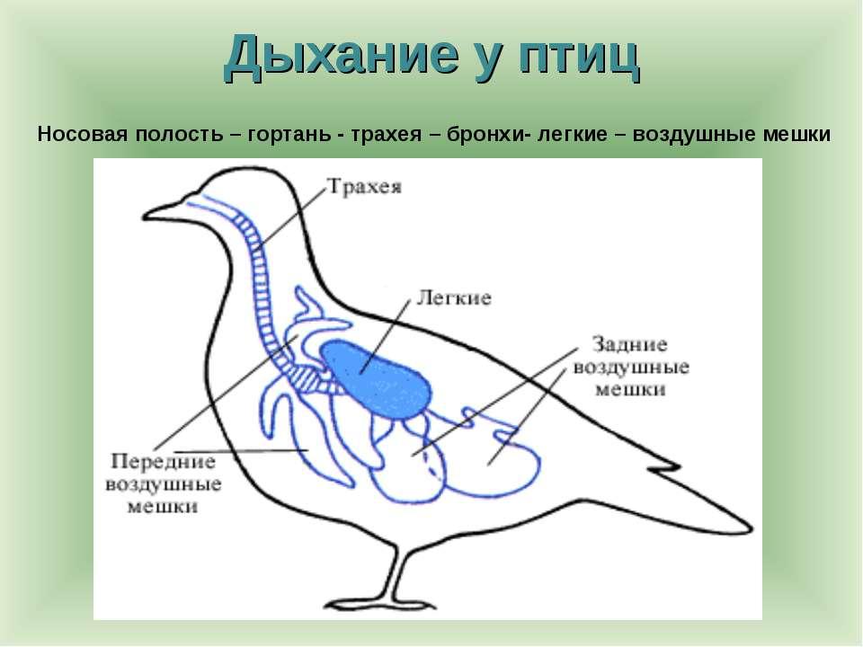 http://bigslide.ru/images/1/750/960/img18.jpg