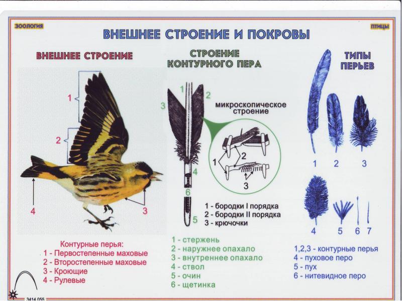 http://mypresentation.ru/documents/b699593ae1829cc35155cc3926efa2f1/img5.jpg