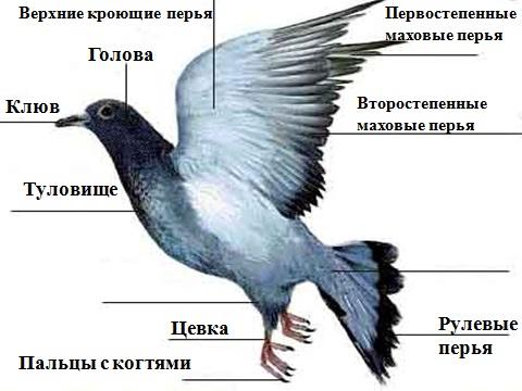 http://student.progmeistars.lv/2013_08Shibarenkova/vnesh_ptic.jpg