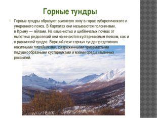 Горные тундры Горные тундры образуют высотную зону в горах субарктического и
