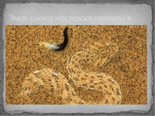 Змеи умеют мастерски прятаться.