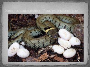 Змеи откладывают яйца, они кожистые
