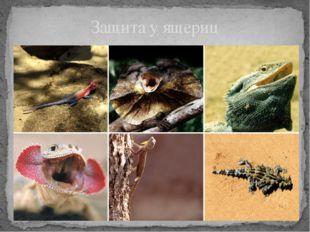 Защита у ящериц