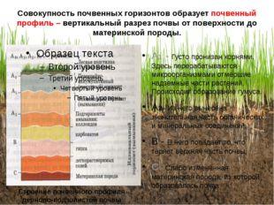 Совокупность почвенных горизонтов образует почвенный профиль – вертикальный р