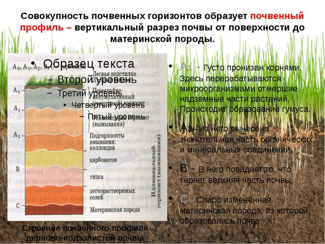 Совокупность почвенных горизонтов образует почвенный профиль – вертикальный р...