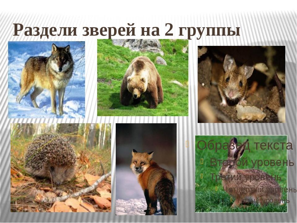 Раздели зверей на 2 группы