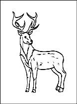 http://boyama.info/boyama/hayvanlar/reindeer-s.jpg