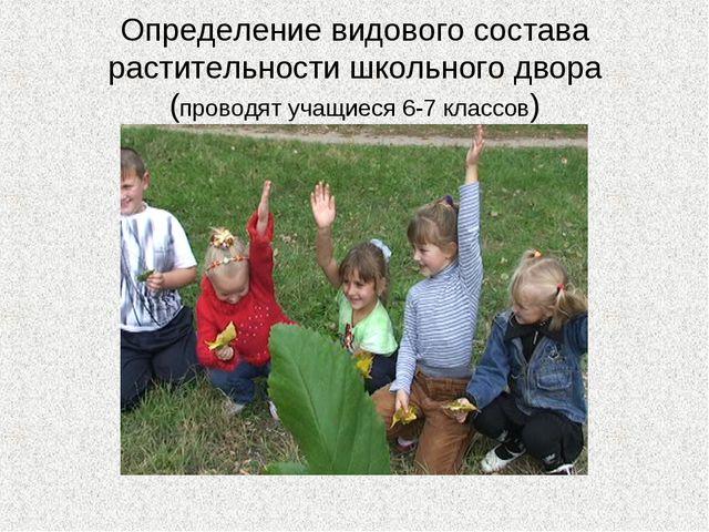 Определение видового состава растительности школьного двора (проводят учащиес...