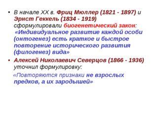 В начале ХХ в. Фриц Мюллер (1821 - 1897) и Эрнст Геккель (1834 - 1919) сформу
