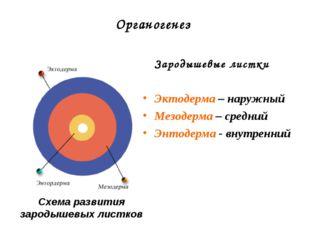 Органогенез Зародышевые листки Эктодерма – наружный Мезодерма – средний Энтод