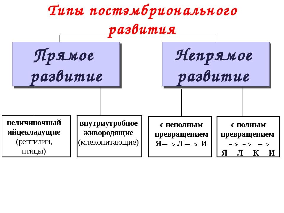 Типы постэмбрионального развития Прямое развитие Непрямое развитие неличиночн...
