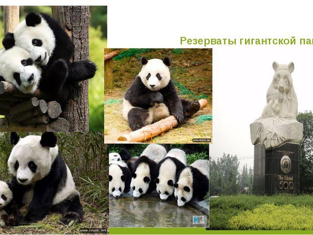 Резерваты гигантской панды