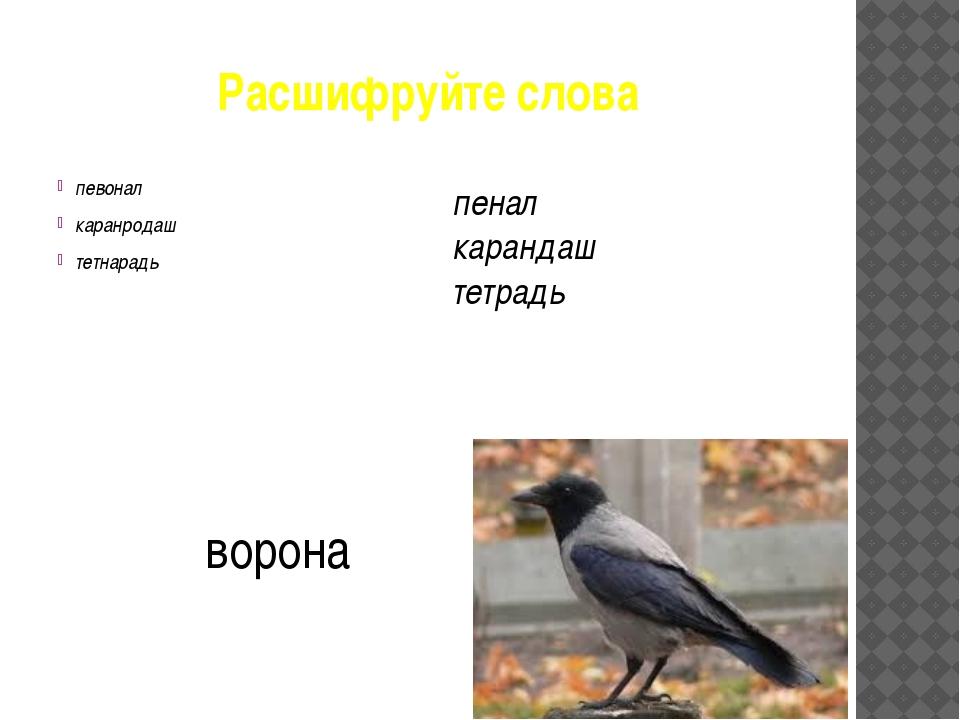 Расшифруйте слова певонал каранродаш тетнарадь пенал карандаш тетрадь ворона