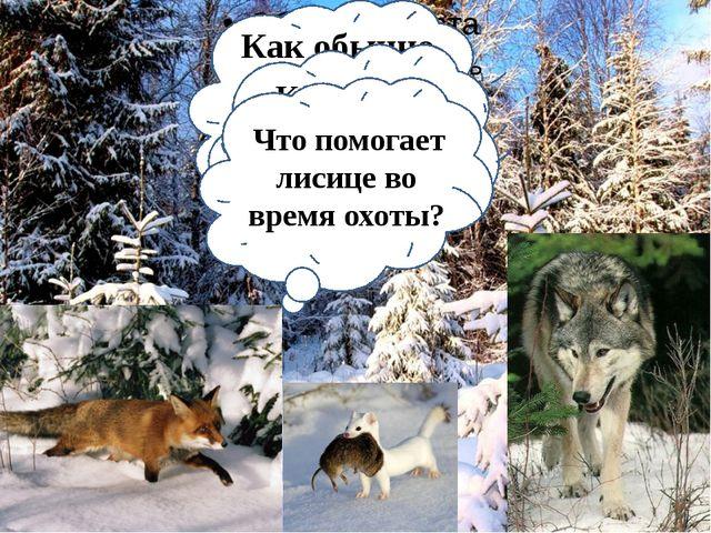А как животным без шерсти уберечься от холода? Природа помогла в этом деле к...