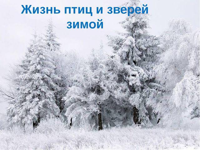 Жизнь птиц и зверей зимой