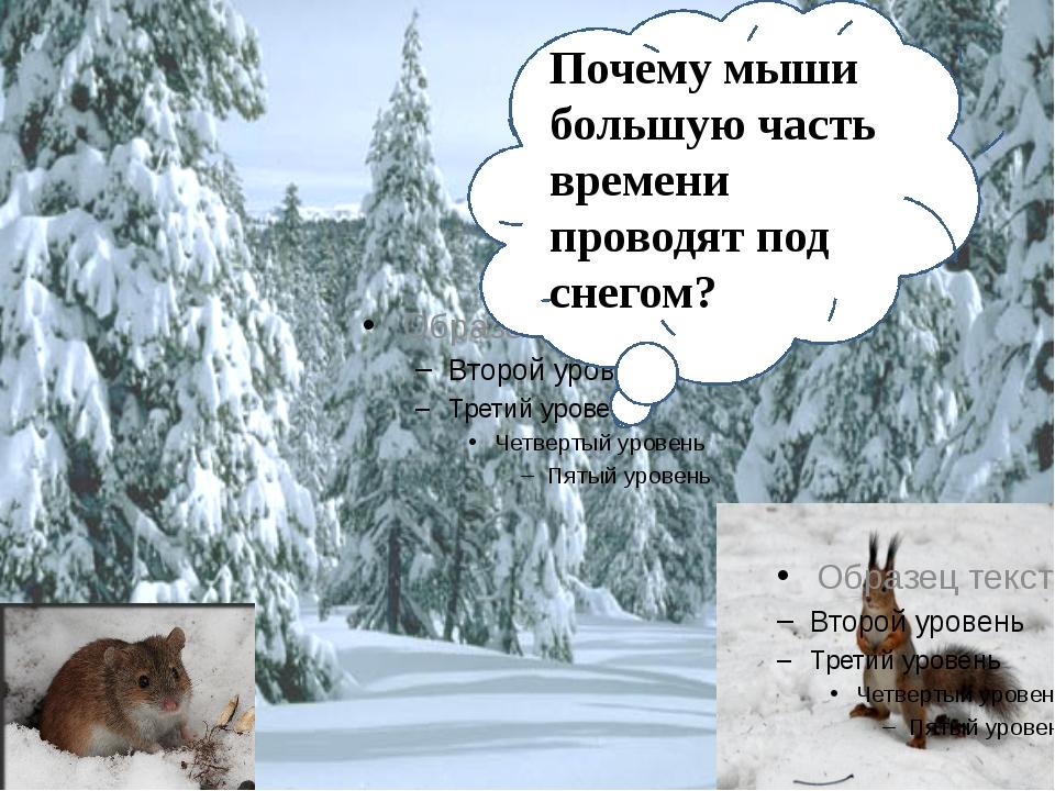 Звери поступают мудро, когда впадают в спячку. Их организм в холодное и голо...