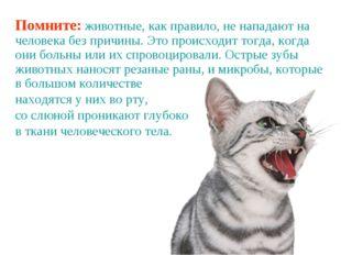 Помните: животные, как правило, не нападают на человека без причины. Это прои