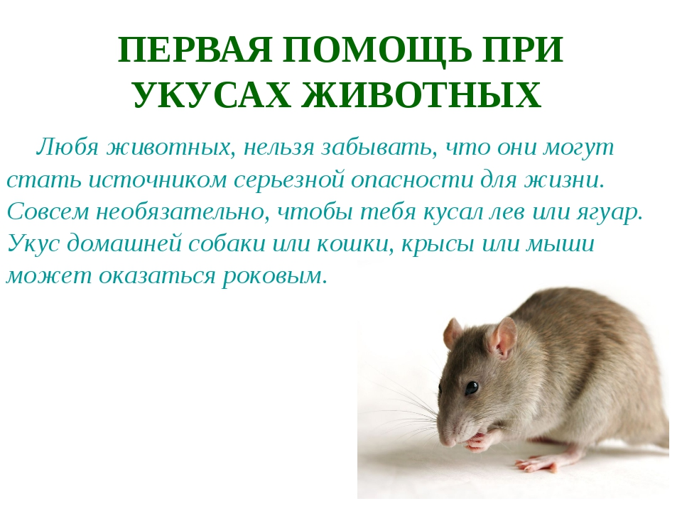 ПЕРВАЯ ПОМОЩЬ ПРИ УКУСАХ ЖИВОТНЫХ Любя животных, нельзя забывать, что они мог...