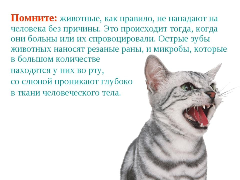 Помните: животные, как правило, не нападают на человека без причины. Это прои...