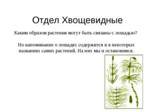 Отдел Хвощевидные Каким образом растения могут быть связаны с лошадью? Но нап