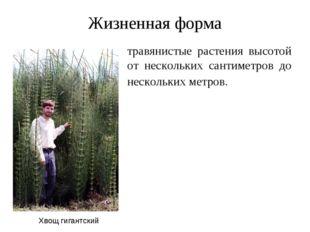 Жизненная форма травянистые растения высотой от нескольких сантиметров до нес