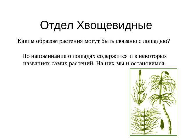 Отдел Хвощевидные Каким образом растения могут быть связаны с лошадью? Но нап...
