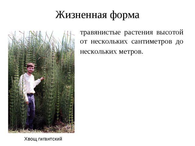 Жизненная форма травянистые растения высотой от нескольких сантиметров до нес...
