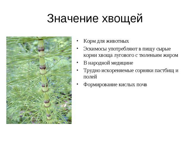 Значение хвощей Корм для животных Эскимосы употребляют в пищу сырые корни хво...