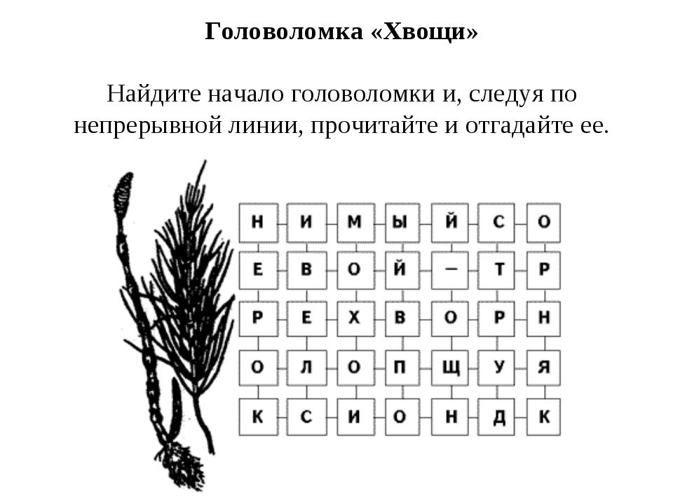 Головоломка «Хвощи» Найдите начало головоломки и, следуя по непрерывной линии...