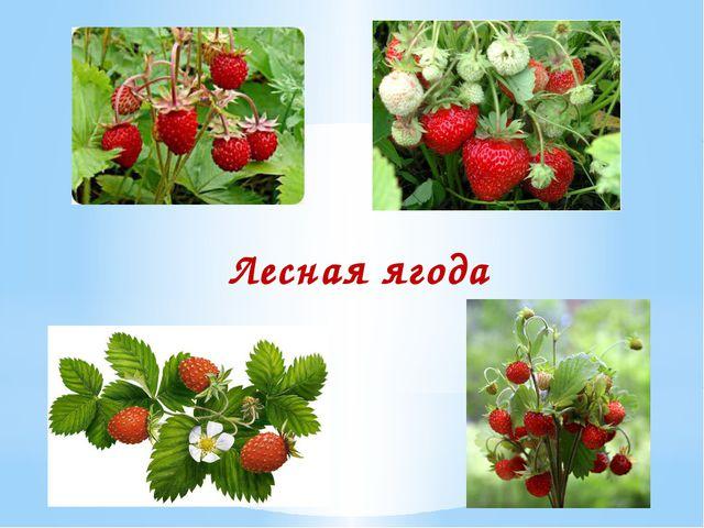 Лесная ягода