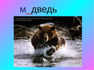 м_дведь